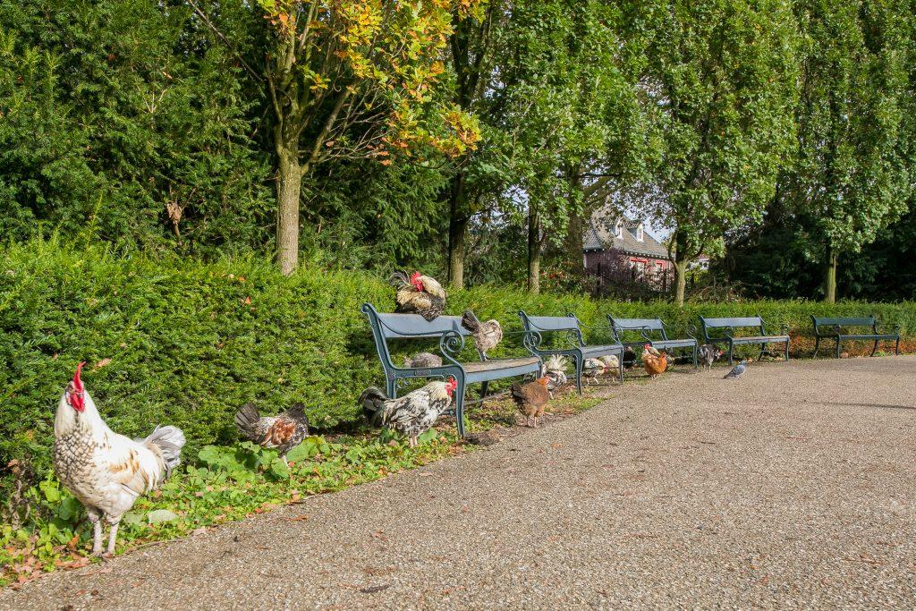 Julianapark, Julianapark: voor velen onbekend, maar zeker niet onbemind, Makelaar in Utrecht